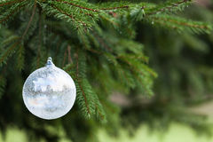 White christmas buble. Pine tree and white buble Royalty Free Stock Photography