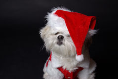 White christmas dog Royalty Free Stock Photography