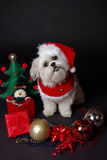 White christmas dog. Maltese and Shih-Tzu mix white dog dressed for christmas Royalty Free Stock Images