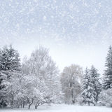 White christmas forest with snow stock images