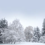 White christmas forest with snow Stock Photo