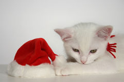 White Christmas kitten. With santa hat Stock Photo