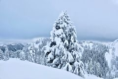 White Christmas. Mount Baker ski resort after snowfall. Stock Images