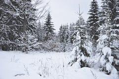 White Christmas na república checa imagens de stock