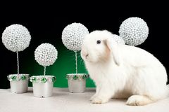 White christmas rabbit on green background Stock Photography