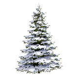 White Christmas Snow Tree. Snow Covered Christmas Tree on White Background, Christmas-tree Background,  Noel Tree, New Year and Happy Holidays Celebrations Stock Photos