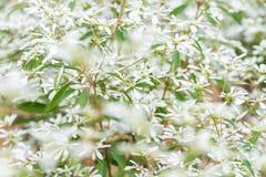 White christmas tree. As background Stock Photos