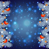 White Christmas tree branches with bullfinches Royalty Free Stock Image