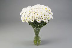 White chrysanthems Stock Photography