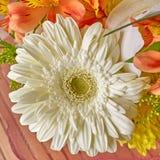 White chrysanthemum flower closeup Royalty Free Stock Photo