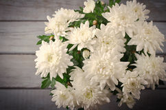 White Chrysanthemum in flower pot with gift, greeting card, on grey wooden backround Royalty Free Stock Image