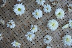 White chrysanthemum flower Type Species name Chrysanthemum indicum linn. On tray stock photo
