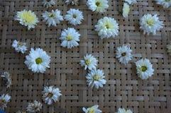 White chrysanthemum flower Type Species name Chrysanthemum indicum linn. On tray stock images