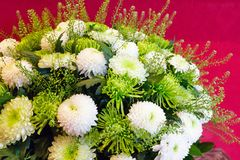 White chrysanthemum flowers bouquet Stock Images