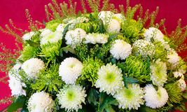 White chrysanthemum flowers bouquet Royalty Free Stock Image