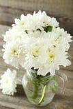 White chrysanthemum flowers Royalty Free Stock Photography
