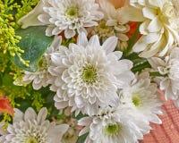 White chrysanthemum flowers Royalty Free Stock Images