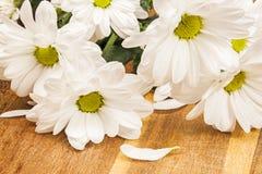 White chrysanthemum flowers Royalty Free Stock Photos