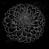 White chrysanthemum outline with gray spots on a black background Royalty Free Stock Images