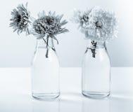 White chrysanthemum petals Stock Images