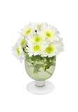 White chrysanthemum in vase Stock Image