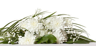 White chrysanthemums Stock Image
