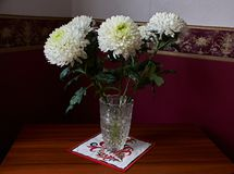 White chrysanthemums in a crystal vase. White chrysanthemums of spherical form with a green core in a crystal vase stand on a table. Russia, Moscow, holiday Stock Photos