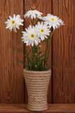 White chrysanthemums in a vase on a wooden Royalty Free Stock Photography