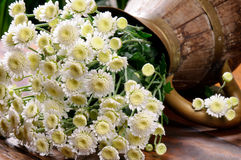 White chrysanthemums in vintage jug Stock Photo