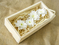White chrysanthemums in wood box. Beautiful white flower in a wooden box on sackcloth Royalty Free Stock Photos