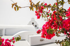 White church and red flowers. Stock Image