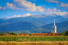 White church tower and Retezat mountains. White church tower with corn field foreground and Retezat mountains background in Hunedoara county, Romania Royalty Free Stock Images