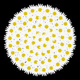 White circle frame shaped daisy flower Stock Images