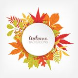 White circle surrounded by various colorful autumn tree leaves and branches and place for text in center. Seasonal Stock Images