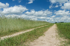 White cirrus clouds on blue daylight sky above rye farm field Stock Photography
