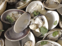 White clams in white wine sauce Stock Photography