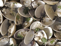 White clams in white wine sauce Royalty Free Stock Image