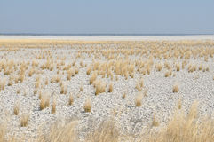 White clay and grass landscape Royalty Free Stock Images