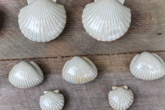 White clay scallop shells. Against a plain wooden background Stock Photography