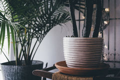 White Clay Vase on Wooden Surface Stock Photos