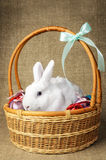 White clean beautiful Easter bunny next to a wicker basket with eggs in the background krashenyymi natural burlap cloth Stock Photography