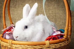 White clean beautiful Easter bunny next to a wicker basket with eggs in the background krashenyymi natural burlap cloth Royalty Free Stock Photos
