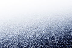 White Clearing Royalty Free Stock Image