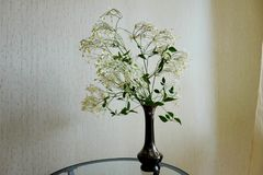 White Clematis Flower stock images