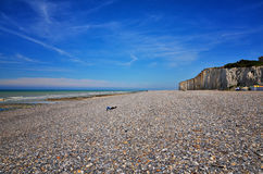 White cliff in Normandy Royalty Free Stock Photo