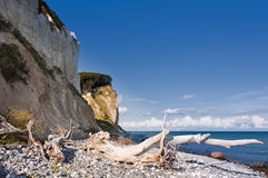 White Cliffs. The white Chalk cliffs at the east coast of the island Moen, Denmark Royalty Free Stock Images
