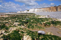 White cliffs. Rocks and white cliffs on the southern coast of England Royalty Free Stock Photography