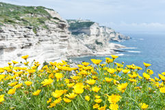 White cliffs of Bonifacio, Corsica. Yellow flowers face the waters of the Mediterranean and the white limestone cliffs of the island of Corsica Stock Photos