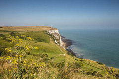 The white cliffs of Dover on a sunny blue sky day with yellow fl Royalty Free Stock Photography