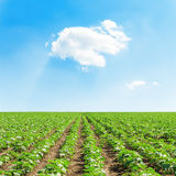White cloud in blue sky over green field Stock Photo